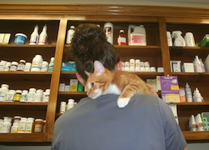 Pet Meds & Rx Refills - Westside Animal Hospital